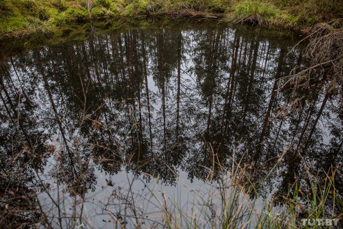 «С этого весь год живут». Как нелегалы обустраивают на болотах лагеря и что после себя оставляют
