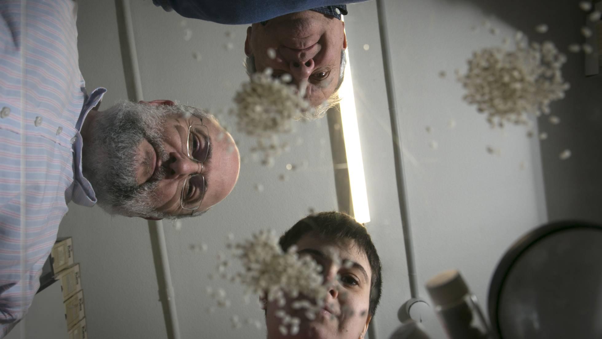 Испанские ученые против фальсификации риса