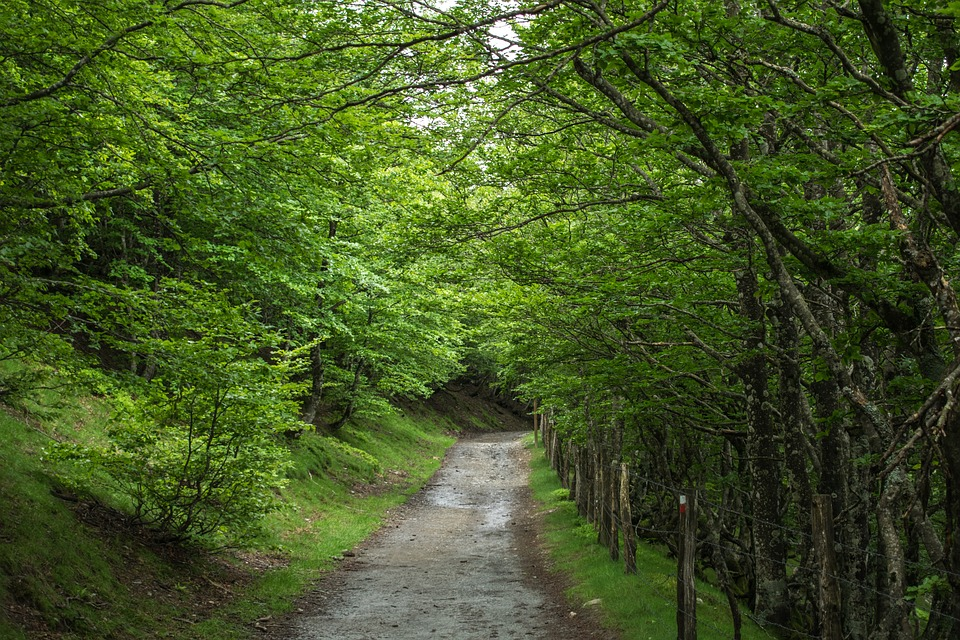 В Ботаническом саду Мадрида презентовали проект, посвященный звукам испанских лесов