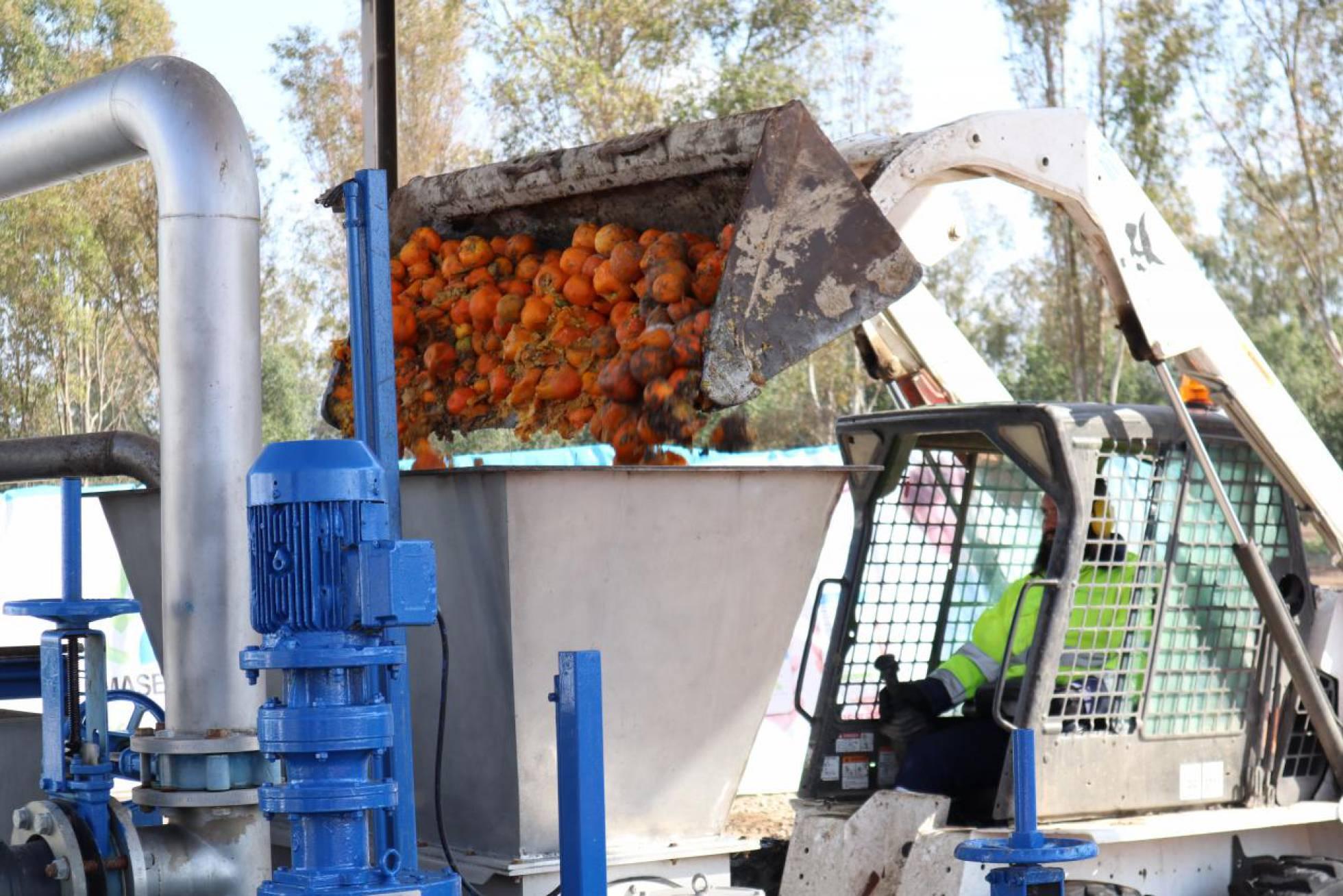 В Севилье разработали проект получения электроэнергии из апельсинов