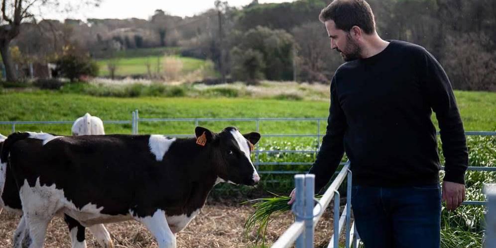 Массаж и классическая музыка как часть заботы о коровах одной из ферм Каталонии