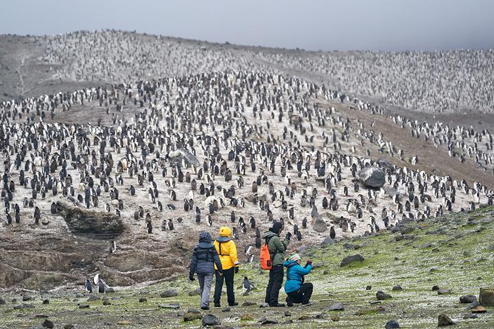 У некоторых видов пингвинов был как раз период линьки – они целыми колониями пережидали ее на островах. Этих птиц было столько, насколько хватало линии горизонта. Фото: Родриго Морага
