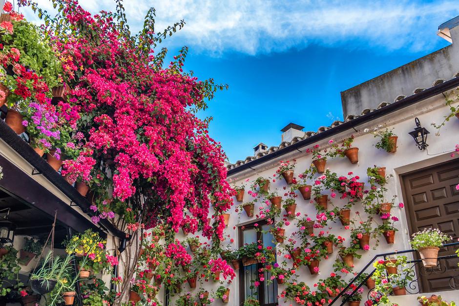 Секреты хранителей цветочных двориков Кордовы