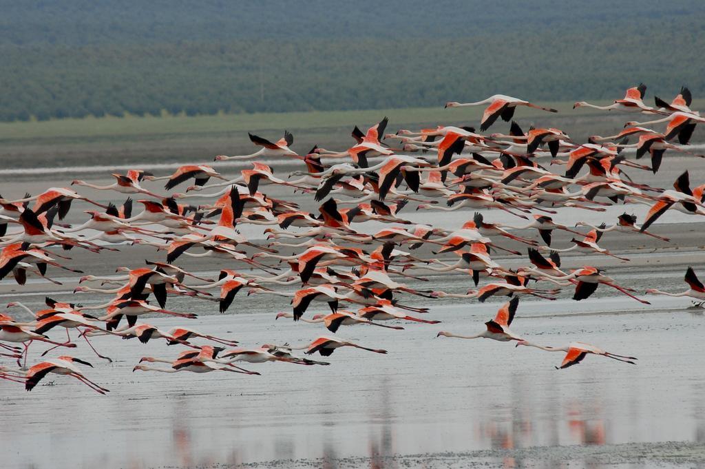 Мир розовых фламинго провинции Малага