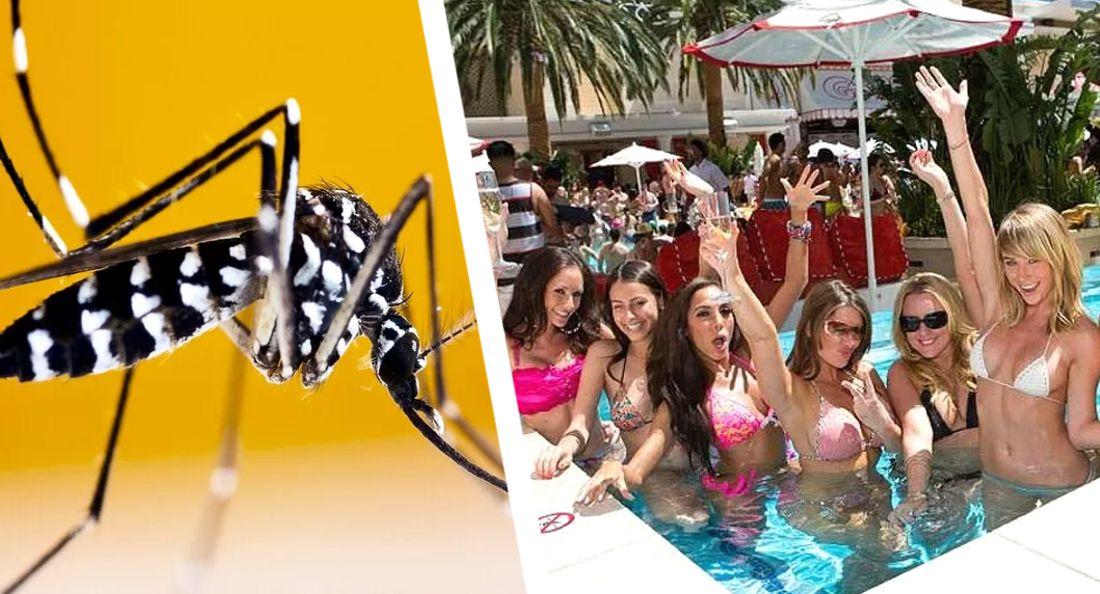 Отели Ибицы в отсутствие туристов заполонили гигантские комары-вирусоносители