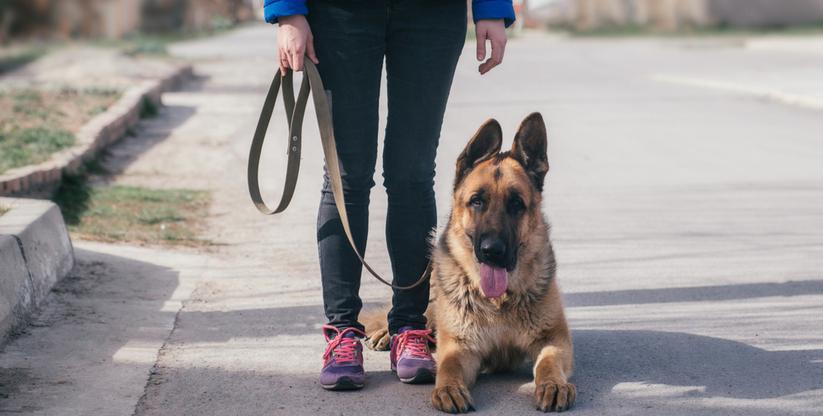 Собачья терапия для помощи жертвам гендерного насилия в Испании