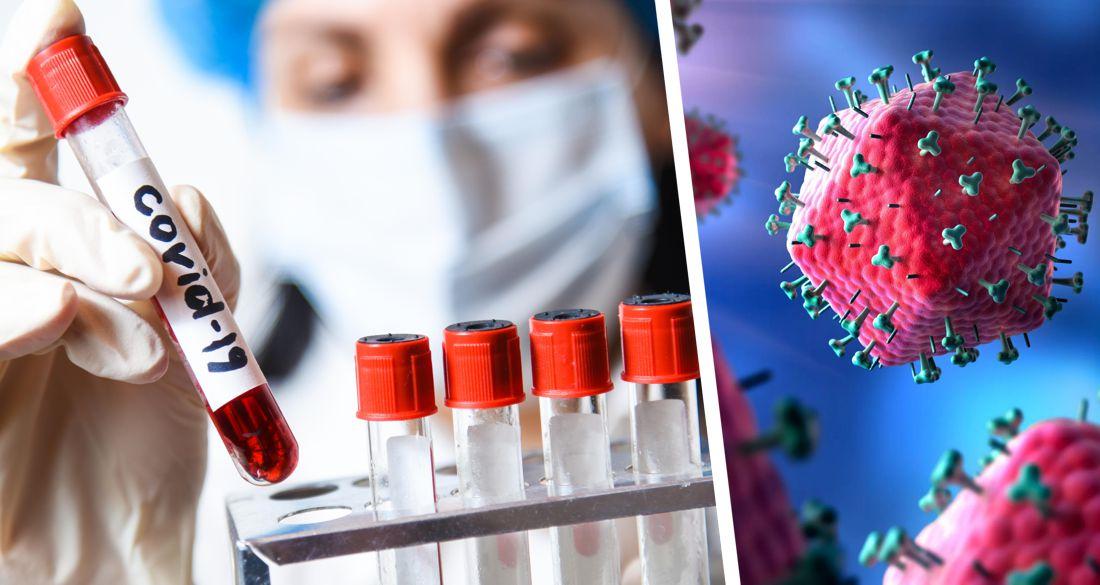Covid-19: антитела в организме могут не вырабатываться, особенно у молодых