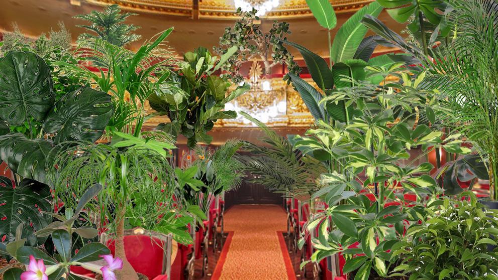 Первыми зрителями после открытия театра Лисеу в Барселоне станут...растения