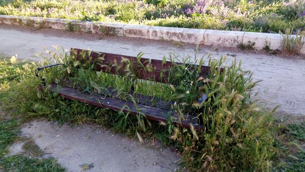 Испанский фотопроект, посвященный растениям, которые заполняли города, пока мы были в изоляции