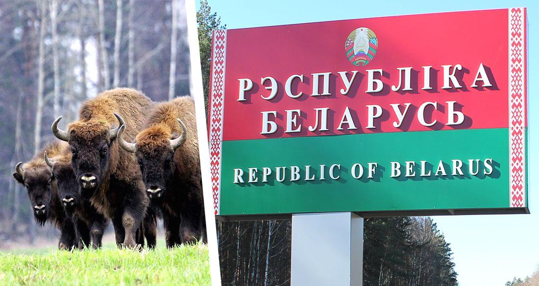 Белоруссия объявила российских туристов безопасными