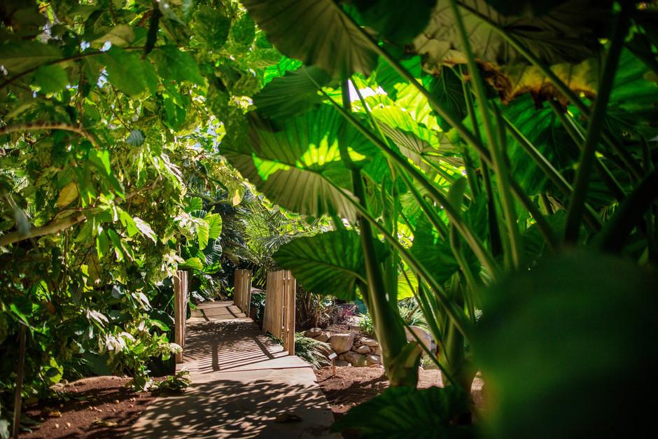 El Palmetum: зеленый оазис в Санта-Крус-де-Тенерифе, созданный поверх мусорной свалки