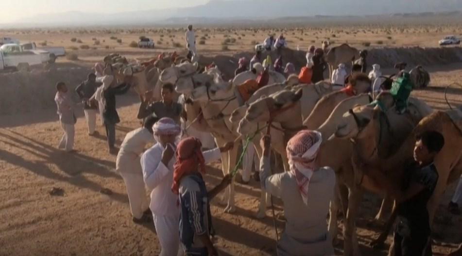 В Шарм-эль-Шейхе начались забеги 500 верблюдов