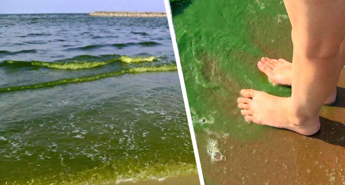 На пляжах Анталии вода позеленела и пожелтела, напугав туристов