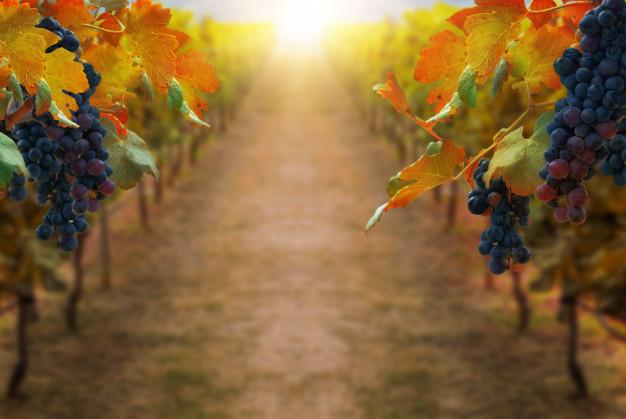 Виртуальные экскурсии по трем винодельням Испании