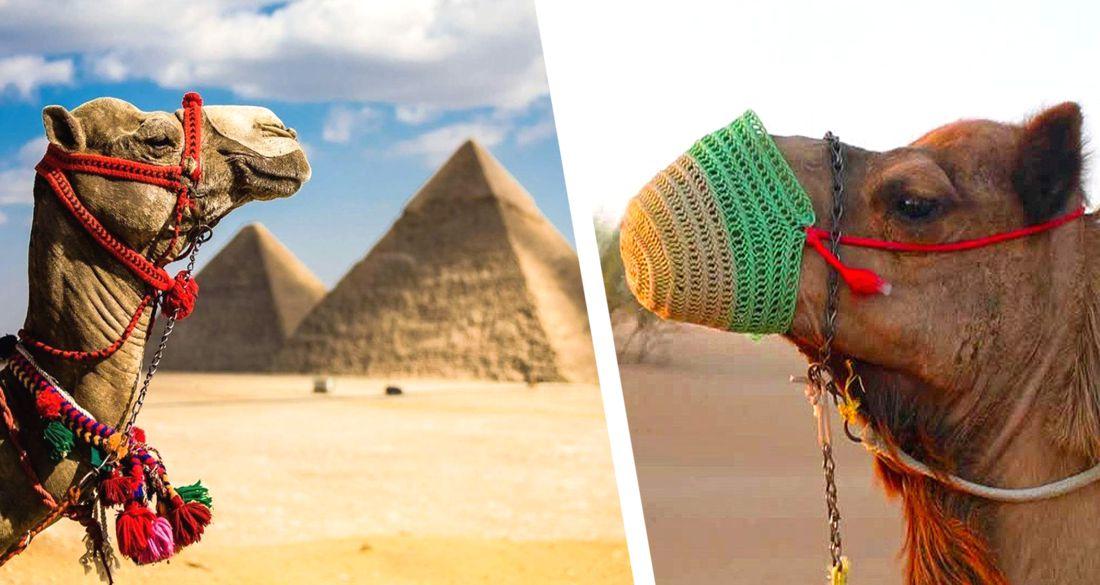 В Египте к пирамидам начали прибывать первые группы туристов