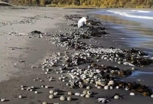 Камчатку отравили: на популярном пляже горы морских животных, туристы жалуются на токсические ожоги