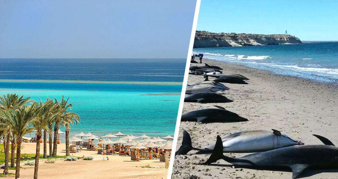 Трагедия на пляже в Египте: туристы нашли на берегу Красного моря 11 мертвых дельфинов