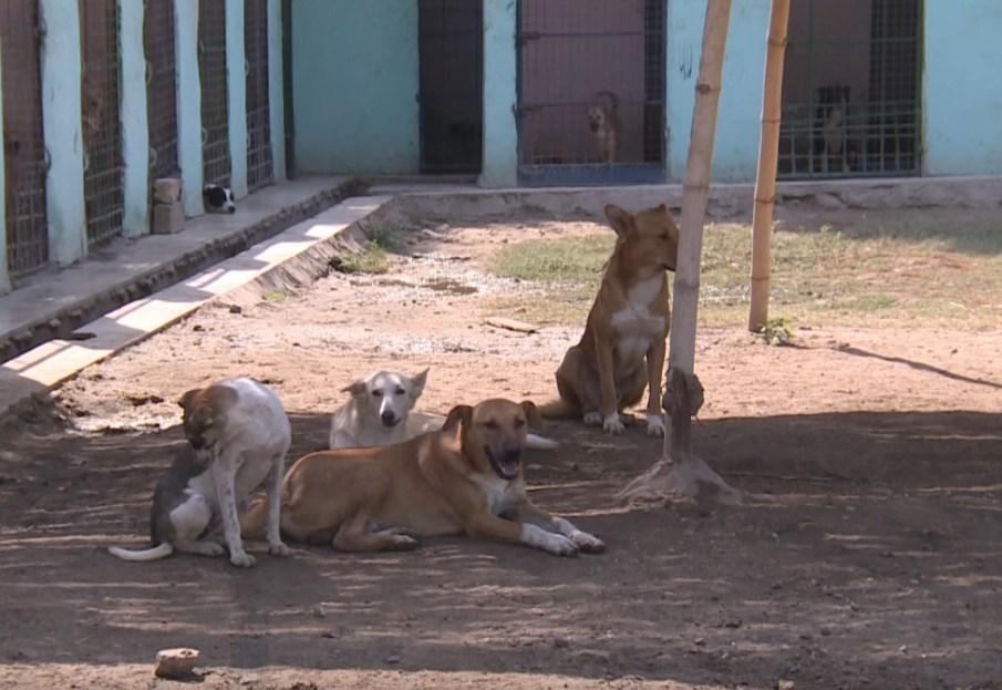 В Хургаде стерилизуют всех собак
