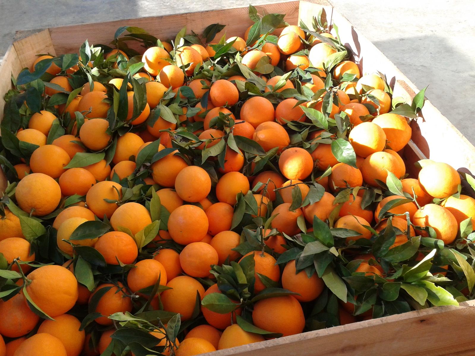 Осенний апельсиновый рай города Кастельон
