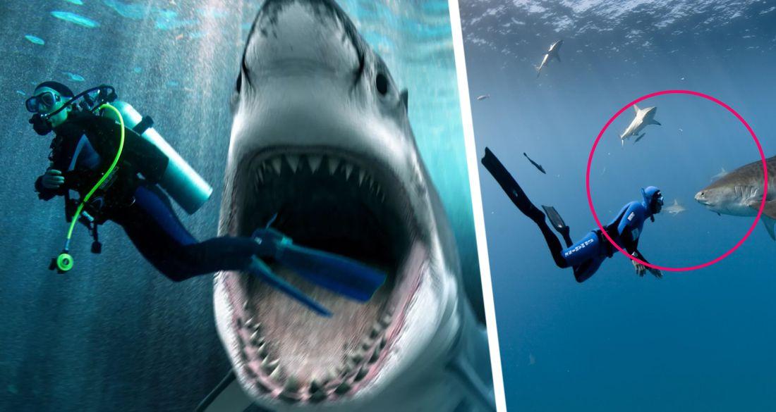 ϟ На курорте Египта акула растерзала туристку