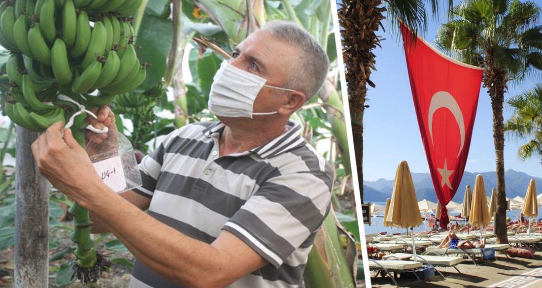 В Анталии разуверились в туризме: сотрудники отелей ушли работать на плантации
