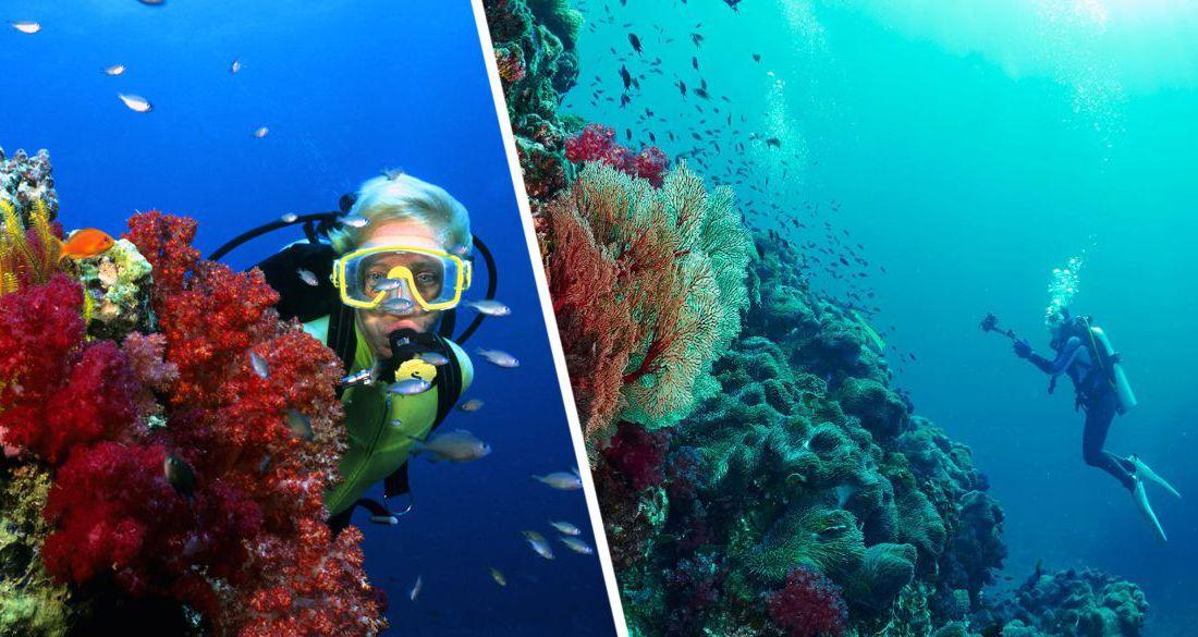 В Египте для туристов возобновляется дайвинг