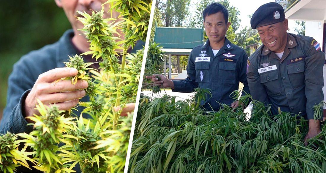 В Таиланде для туристов запустят туры на плантации каннабиса