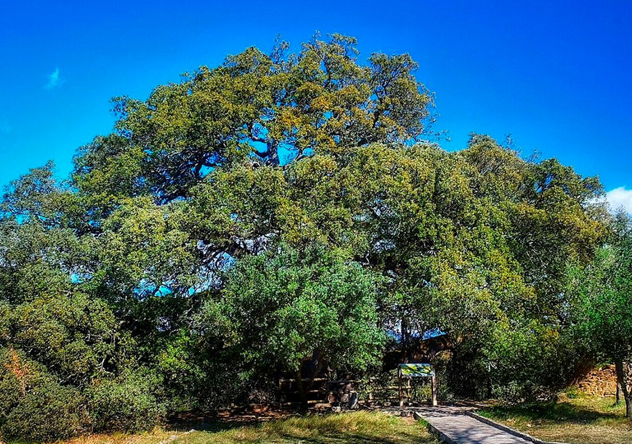 Дерево года в Испании 2021