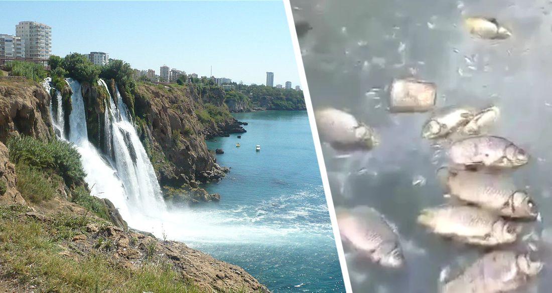 От зловонного водопада в Анталии начала дохнуть рыба