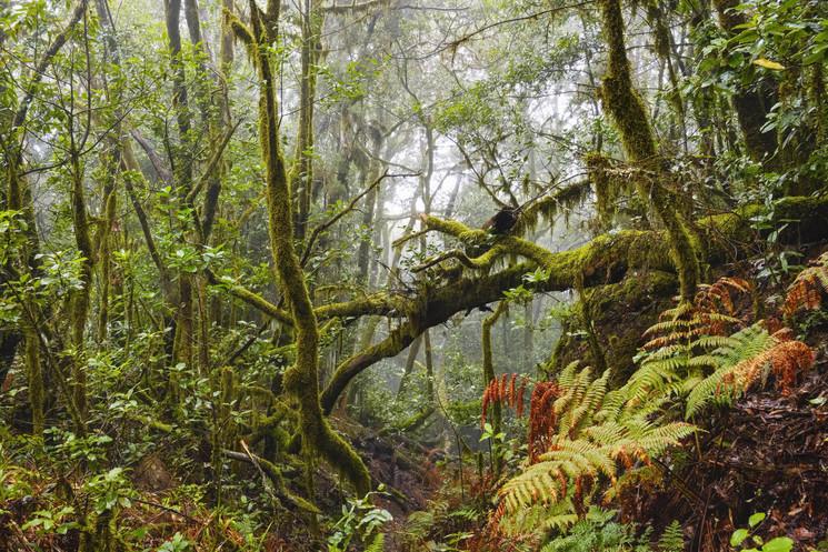 Garajonay: природный парк, хранящий историю трагической любви