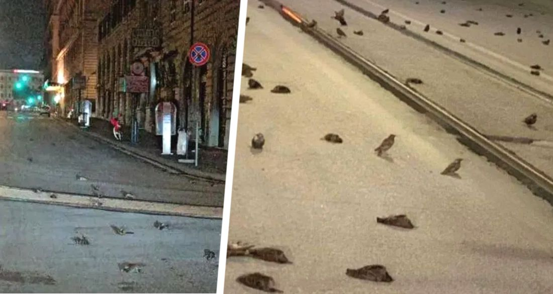 Рим усыпан трупами птиц после новогоднего фейерверка
