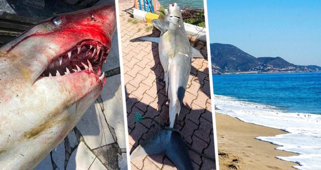 В Анталии на пляж выбросило голодную акулу