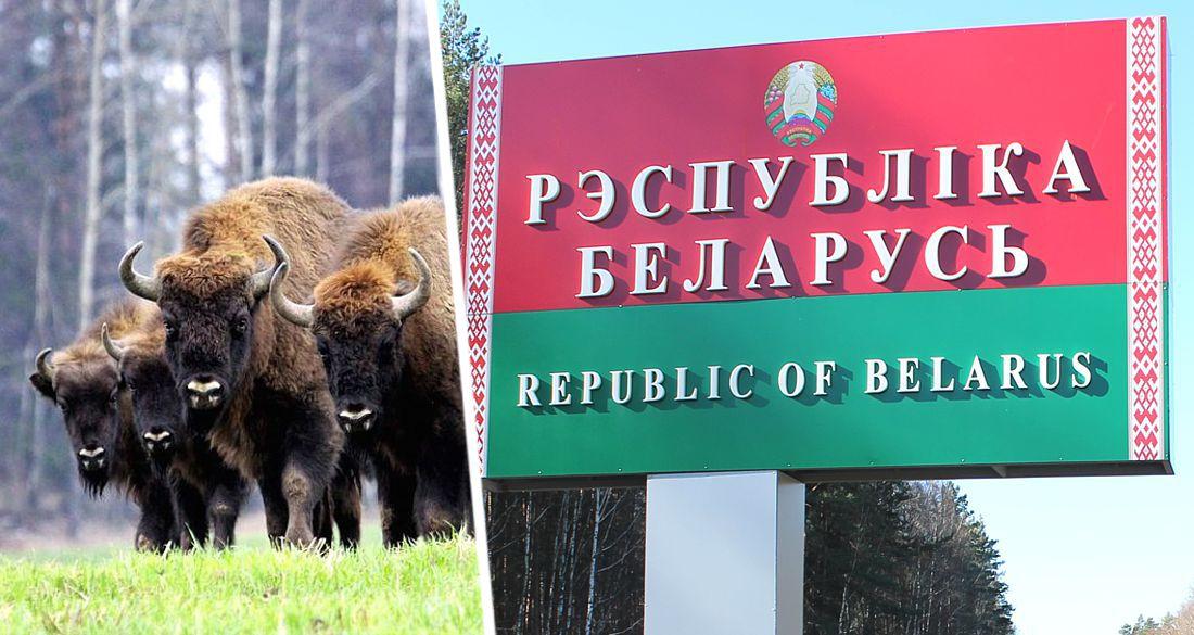 Белоруссия объявила, что ее санатории для российских туристов обойдутся на 20% дешевле, чем в РФ