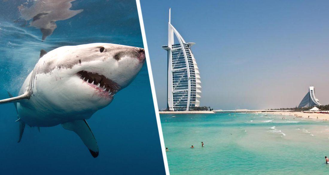 В отеле Дубая выпустили акул на пляж