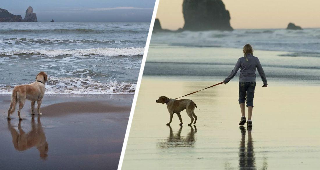 Двойная смерть на пляже: море в этот вечер было «пугающе диким» и туристы исчезли, просто гуляя по берегу