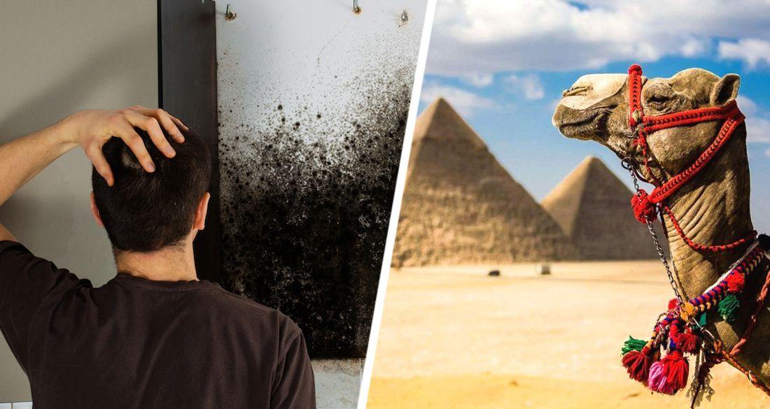 Эпидемия черных грибов вторгается в Египет: туризм полностью защищен, усиливая на курортах  меры безопасности