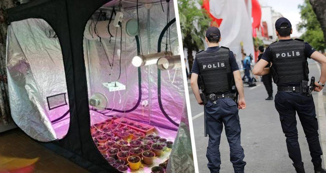 В пустующих отелях Турции начали подпольно разводить коноплю: рассаду выращивают прямо в номерах
