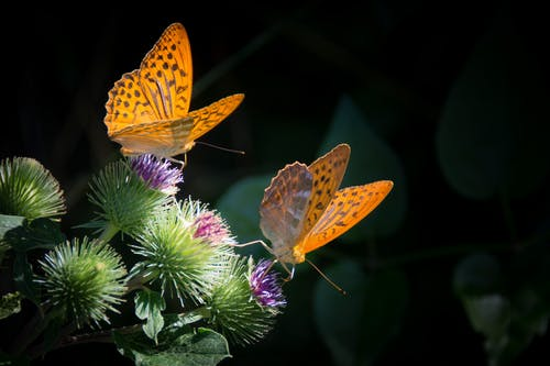 Первый в Каталонии лес бабочек создается в муниципалитете Мальграт-де-Мар