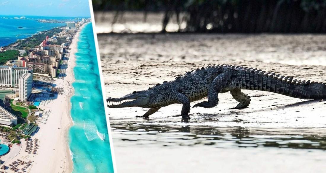 На территории отеля на популярном курорте крокодил напал на ребенка