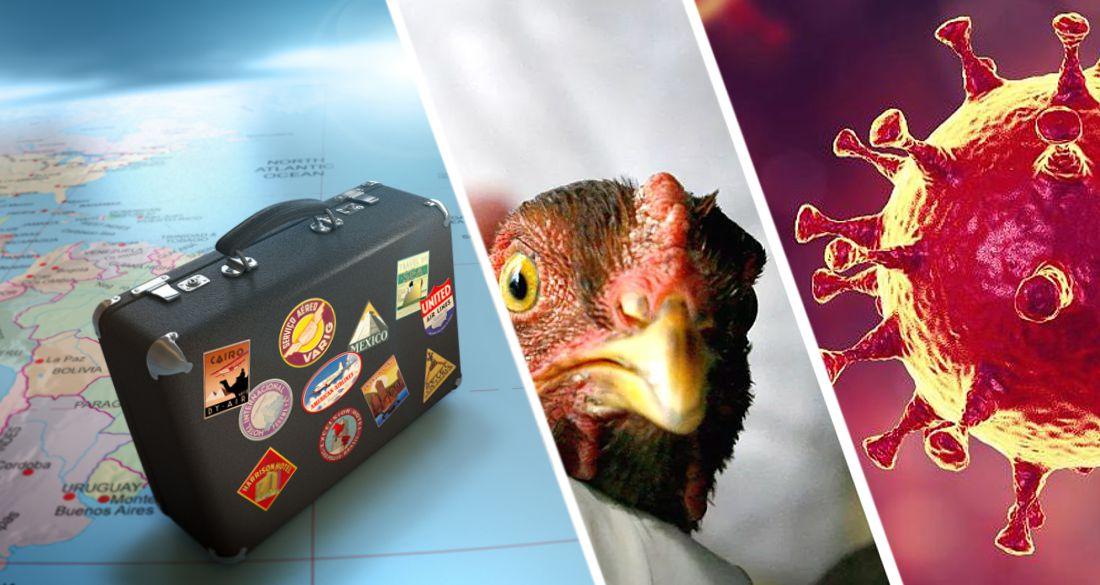 Для туризма прозвучал тревожный звонок: птичий грипп впервые перекинулся на людей, на пороге новая пандемия