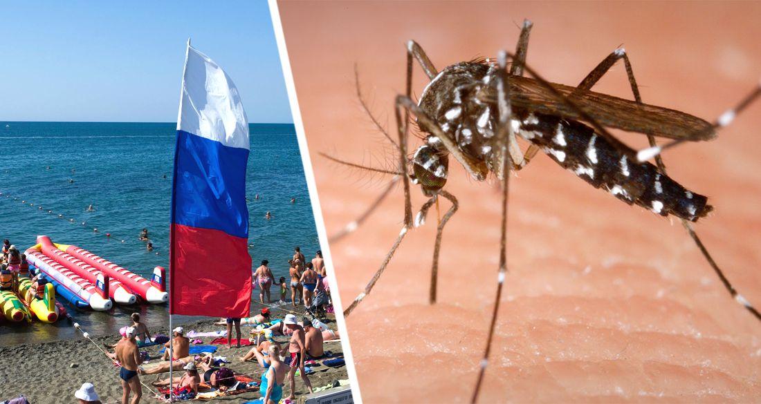 Российских туристов предупредили о нашествии  опасных насекомых: их раньше не было