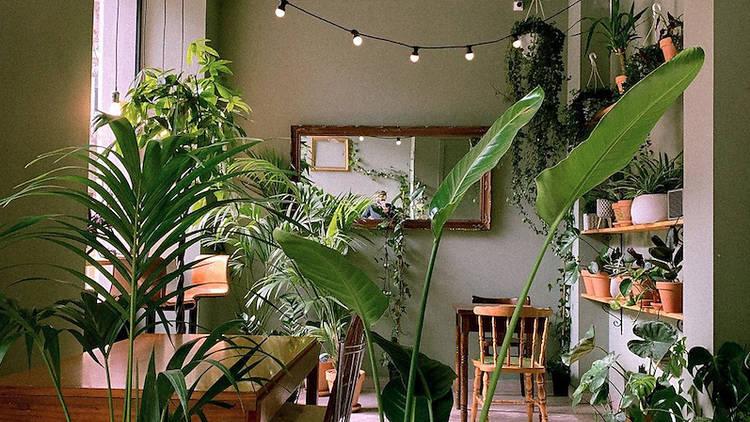 La Suegra del jardinero: первый в Барселоне ботанический бар