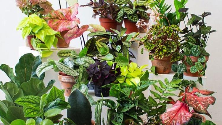Ботаническая ярмарка в Барселоне с бесплатными экземплярами комнатных растений