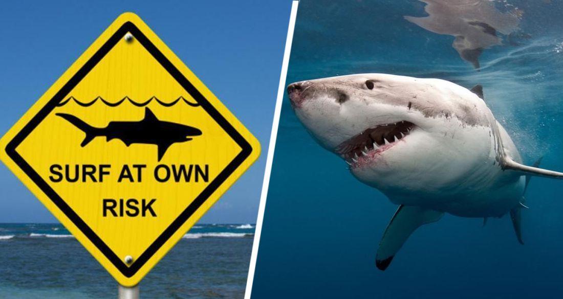 На Красном море акула выпрыгнула из воды и откусила ногу у туриста на параплане. ВИДЕО
