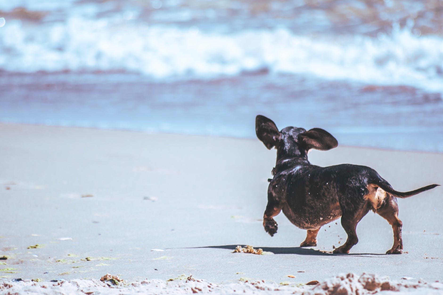 4 лучших dog friendly пляжа Испании