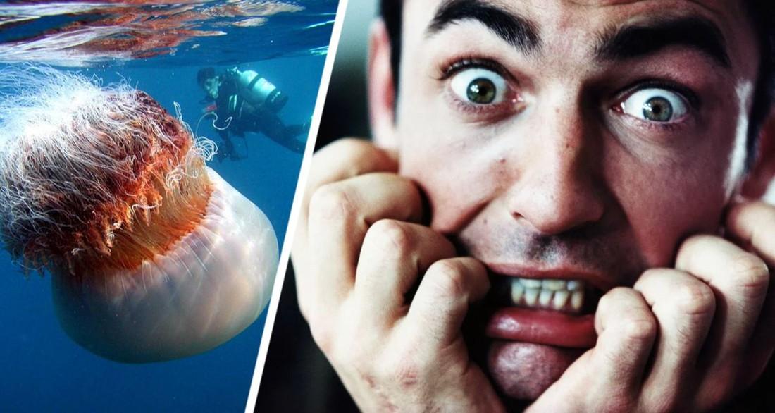 Гигантская медуза едва не сгубила десятерых российски туристов одним махом