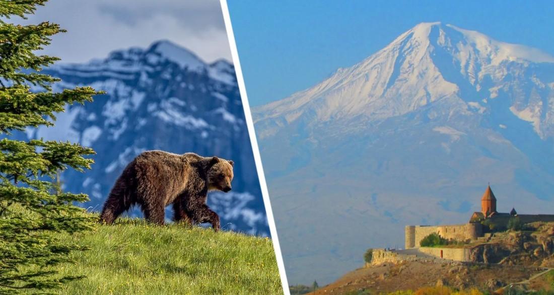 В Турции огромный медведь-призрак набросился на 7-х туристов