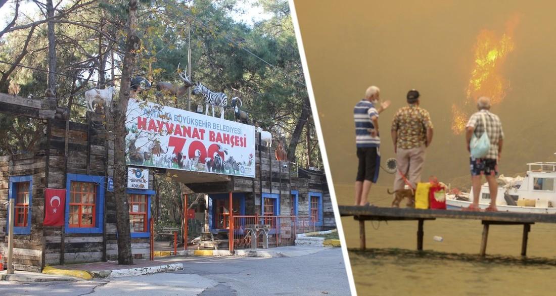 В Анталии из-за пожаров закрыли зоопарк