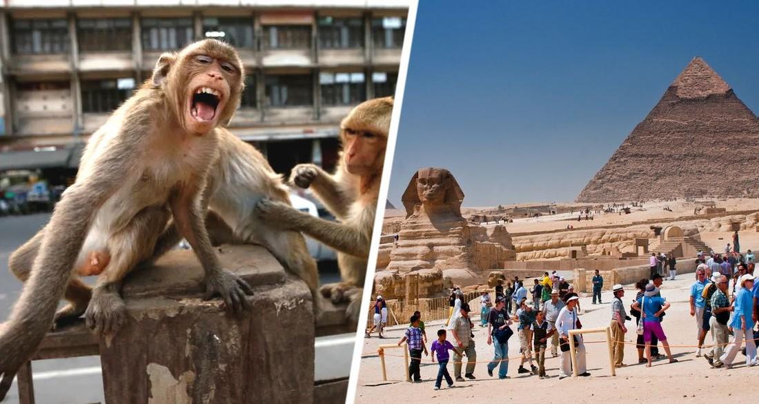 Паника у пирамид Гизы: туристов начала терроризировать банда сбежавших обезьян
