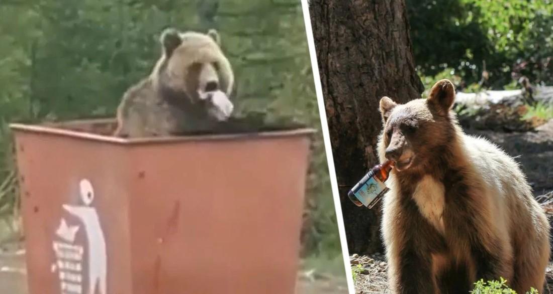 Турист подал в суд из-за медведя в мусорном баке